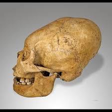 giant-skull